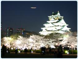 大阪城西の丸庭園観桜ナイター
