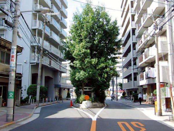 Daimyojin Camphor Tree