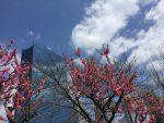 大阪城桃園 桃の花の見頃 2017