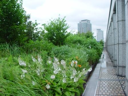 「大阪市役所 屋上緑化施設」一般公開