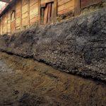 大阪歴史博物館「縄文時代の森の宮遺跡で発見された海の生き物」