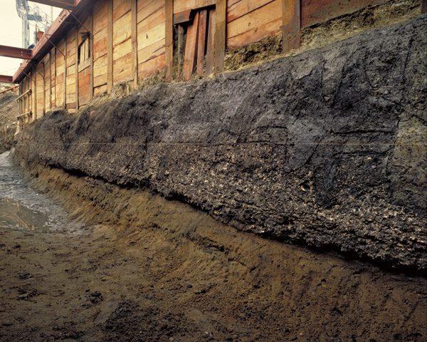 大阪歴史博物館 常設展「縄文時代の森の宮遺跡で発見された海の生き物」