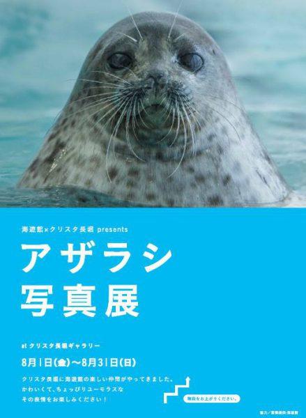 海遊館×クリスタ長堀 presents アザラシ写真展