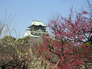 大阪城梅林 梅の花の見頃 2015
