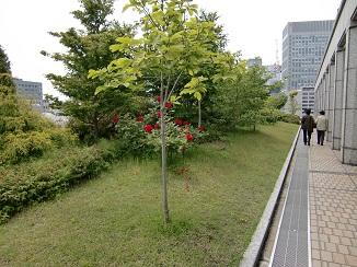 大阪市役所の屋上緑化施設を一般公開 2016