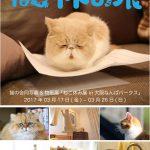 猫の合同写真&物販展「ねこ休み展」in 大阪なんばパークス