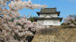 大阪城公園 桜の花の見頃 2017