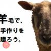 天王寺動物園 ツナグプロジェクト「羊毛で手作りプレゼントを贈ろう!」