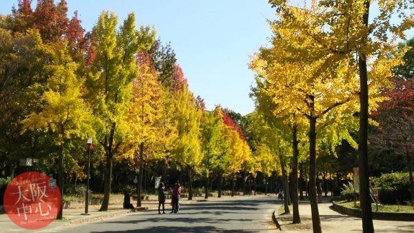 大阪城公園 紅葉見ごろ2017