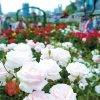 第3回 阪神 賑やかな梅田の街中から、心癒される大阪の公園めぐり