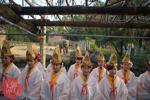 天王寺動物園に福娘から「福笹」が贈られます