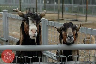 天王寺動物園 ひなまつりイベント