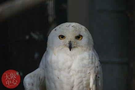 ワークショップ「ペリット、ペリっと!!してみる!?~鳥の落しものを調べて何を食べているか調べてみよう!!~」