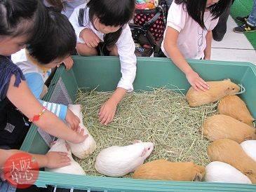 天王寺動物園「テンジクネズミのふれあい体験」
