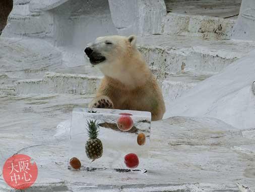 天王寺動物園 ホッキョクグマの「イッちゃん」に氷柱をプレゼント