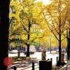 駅長お薦めフリーハイキング(踏破賞対象) 秋の銀杏並木を歩く 御堂筋彫刻ストリートと重要文化財