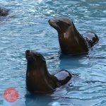 天王寺動物園 お正月イベント