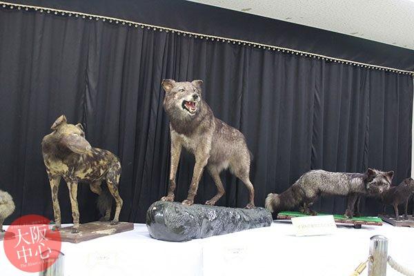 干支の動物展