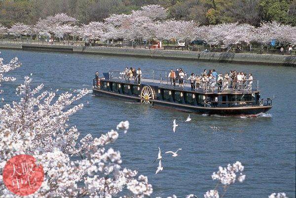 ひまわり 桜スペシャルクルーズ2019