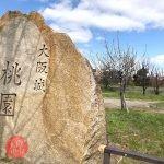 大阪城桃園 桃の花の見頃 2019