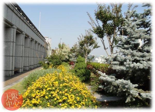 大阪市役所の屋上緑化施設を一般公開 2019