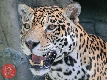 天王寺動物園 バレンタインイベント