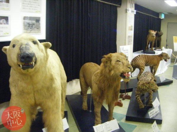 企画展「戦時中の動物園」