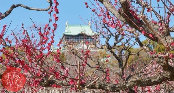 大阪城梅林 梅の花の見頃 2021