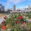 大阪・まち・再発見・ぶらりウォーク「大阪市中央公会堂と大川沿いを楽しもう」