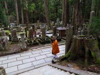 高野山奥の院参道巨杉群
